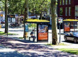 Thích mê với những nhà chờ xe buýt đầy hoa cỏ của Hà Lan