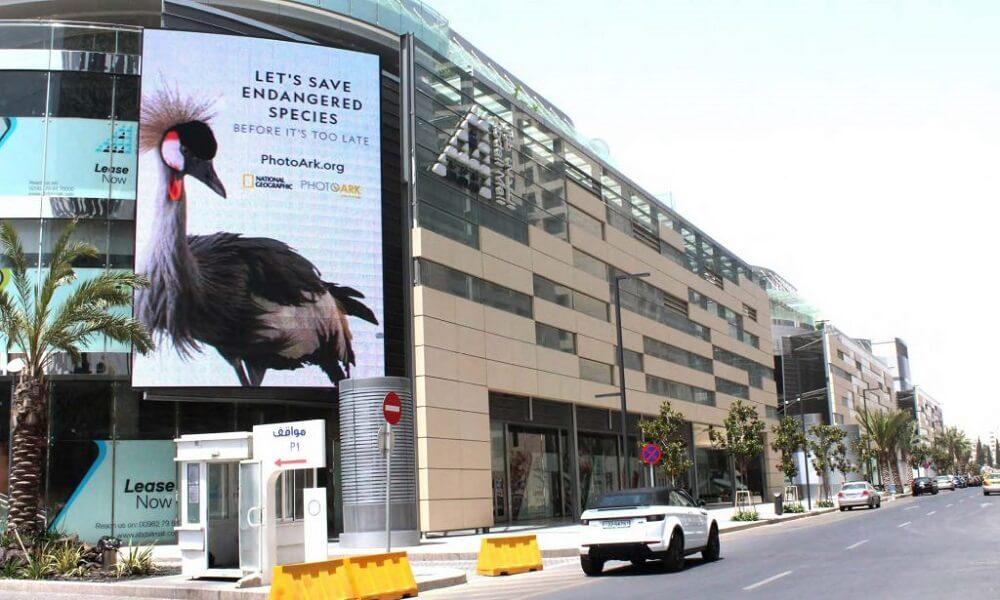 chiến dịch quảng cái ngoài trời cứu trợ động vật hoang dã có nguy cơ tuyệt chủng