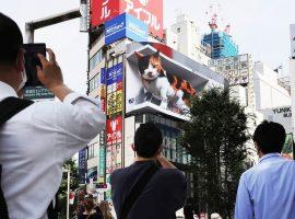 Chú mèo khổng lồ xuất hiện trên Billboard LED 3D tại Ga Shinjuku (Nhật Bản)
